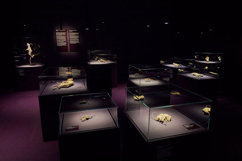Ausstellungsraum mit Tiermumien