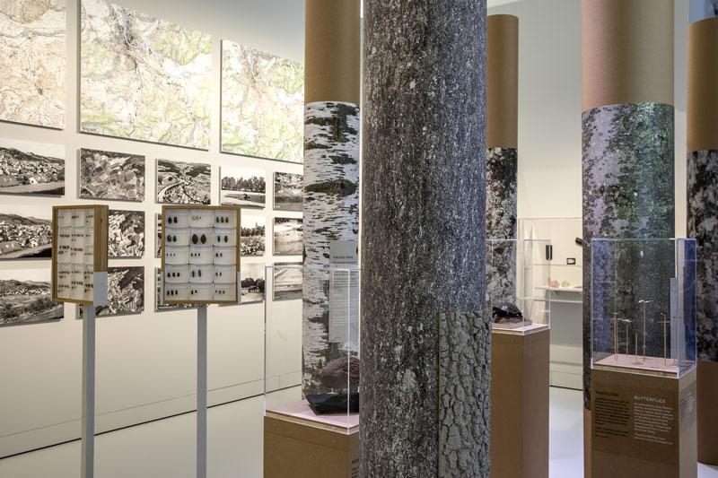 Ausstellungsraum zum Thema Baumstämme oder Bäume im Wald