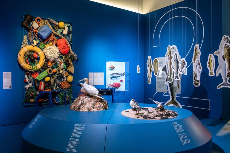 Ausstellungsraum in blau mit dem Thema Tiere im Ozean