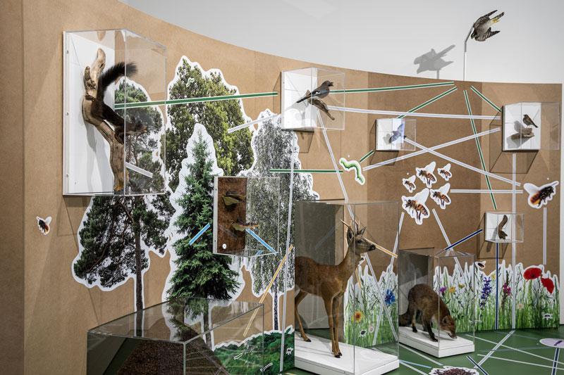 Ausstellungsraum mit vielen verschiedenen Tieren vom Wald